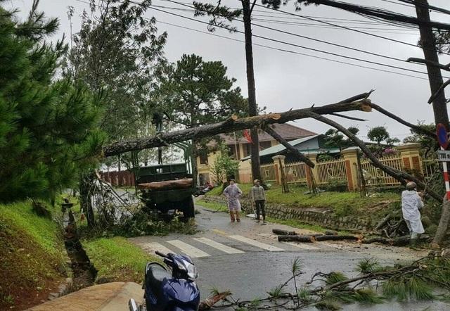 Mưa lớn khiến nhiều cây xanh bị quật đổ, 20 nhà dân bị tốc mái - 2