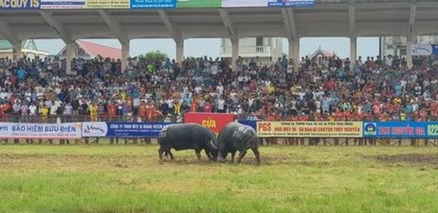 Không bán vé Lễ hội chọi trâu Đồ Sơn năm 2019 - 1