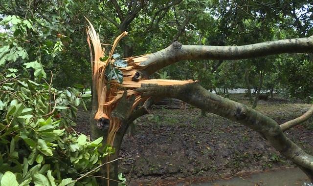 Vĩnh Long: Giông lốc làm tốc mái nhà, gãy đổ nhiều cây xanh - 3