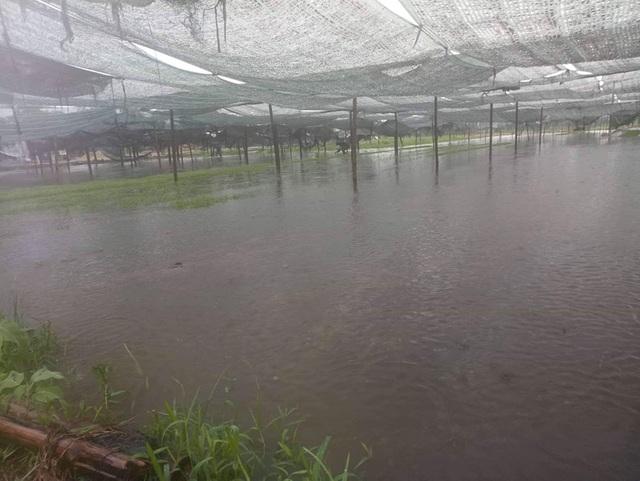 Hàng ngàn ha lúa hè thu chìm trong biển nước vì mưa lớn kéo dài - 2