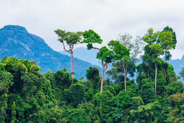 """Tìm thấy cây cao nhất trong rừng Amazon, may mắn """"thoát chết"""" khỏi trận cháy lịch sử - 2"""