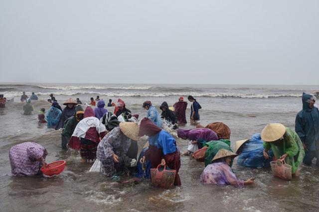 Biển động đánh vẹm dạt vào bờ, cả làng đổ xô đi vớt - 2