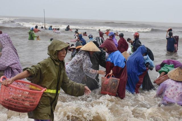 Biển động đánh vẹm dạt vào bờ, cả làng đổ xô đi vớt - 3