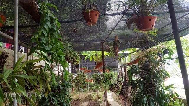 8X Lạng Sơn mêphong lan rừng: Kiếm trăm triệu từ 1 câu nhỡ mồm - 1