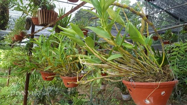 8X Lạng Sơn mêphong lan rừng: Kiếm trăm triệu từ 1 câu nhỡ mồm - 3
