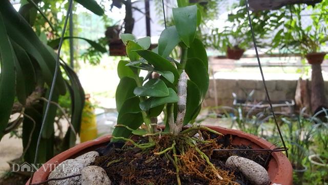 8X Lạng Sơn mêphong lan rừng: Kiếm trăm triệu từ 1 câu nhỡ mồm - 5