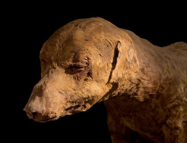 Khám phá thế giới của người chết, phát hiện hàng triệu xác ướp động vật - 1