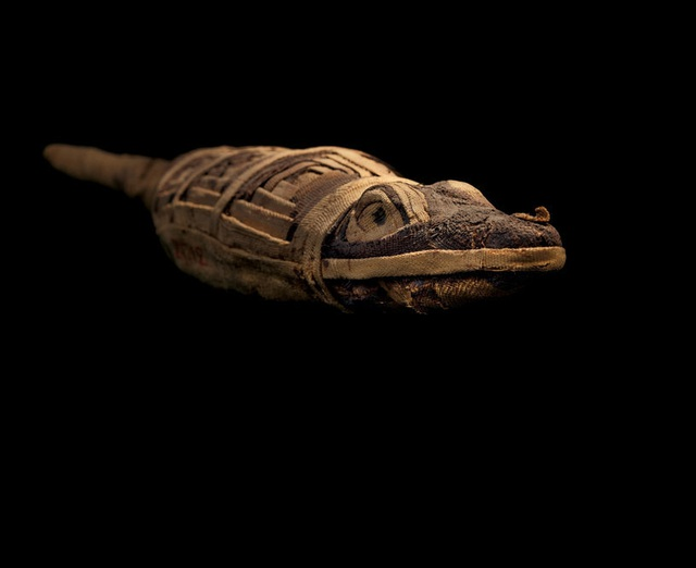 Khám phá thế giới của người chết, phát hiện hàng triệu xác ướp động vật - 2