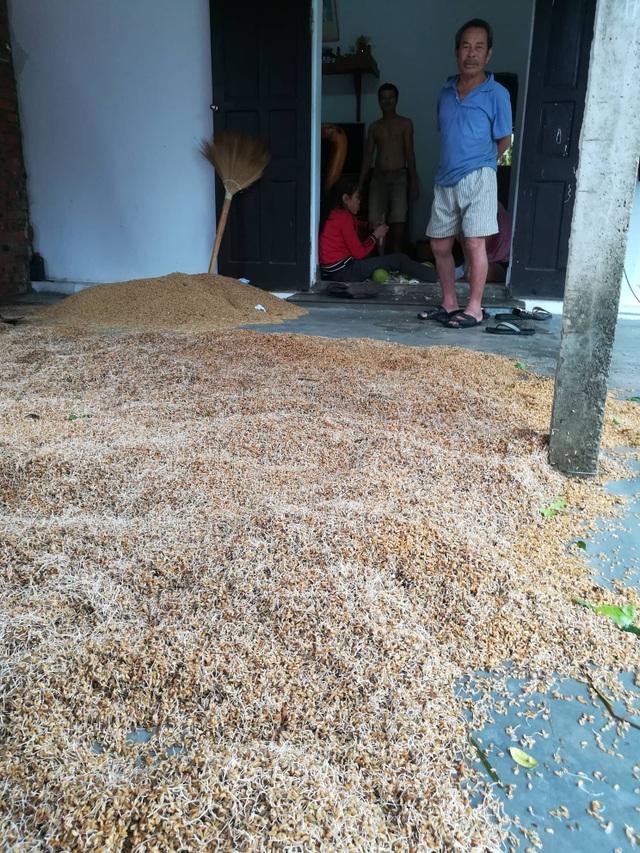 Người dân biến bồn trộn bê tông thành... máy sấy lúa - 1