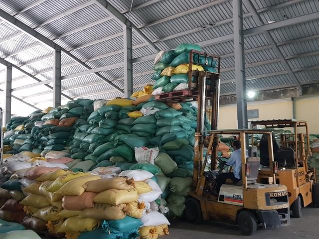 """Máy sấy chạy hết công suất """"cứu"""" hàng trăm tấn lúa ngập nước, nảy mầm - 6"""