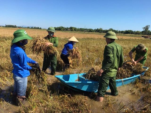 Nông dân ngậm ngùi gặt lúa về… cho gà ăn - 8