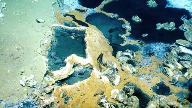 """Hồ thuốc độc – """"Cái bẫy"""" dưới đại dương giết hầu hết sinh vật không may chạm vào - 4"""