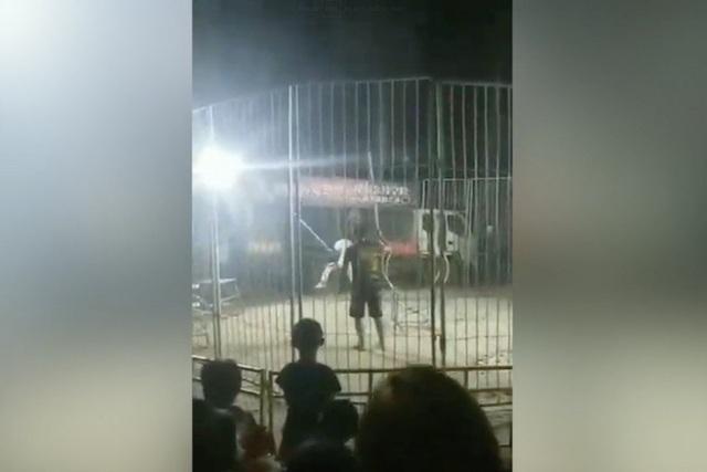 Trung Quốc: Hổ xổng chuồng ngay giữa màn trình diễn, người xem hoảng loạn chạy thoát thân - 1