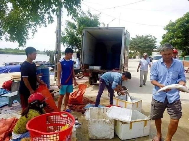 Xác định nguyên nhân khiến hàng chục tấn cá đặc sản chết trắng bè - 2