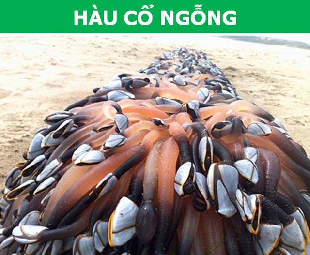 Choáng với cái giá trên trời của những loài sinh vật biển đắt nhất thế giới - 2