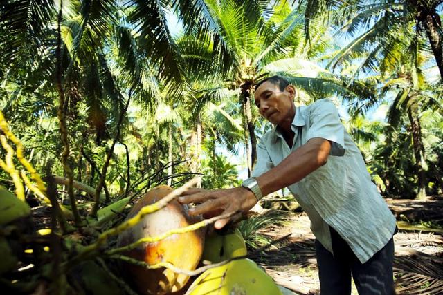 Cocoxim - câu chuyện về nỗ lực vươn ra thế giới của nước dừa Bến Tre - 1