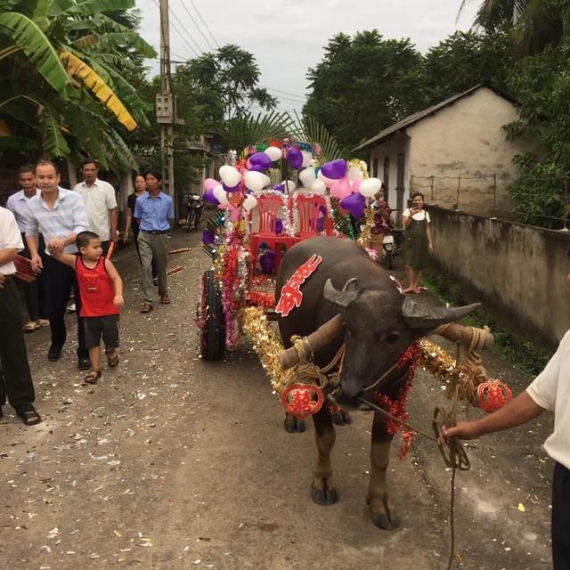 Độc đáo đám cưới rước dâu bằng xe trâu ở Thanh Hóa - 3