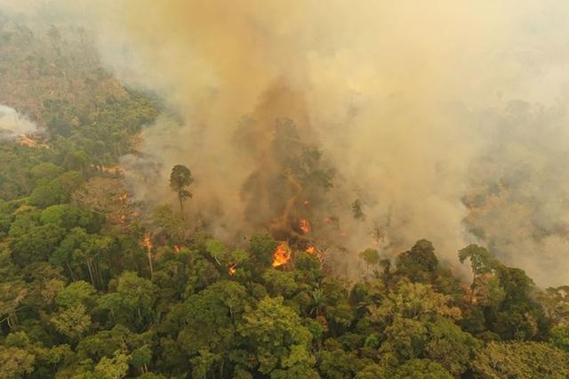 Cháy rừng nhiệt đới Amazon đe dọa 265 loài đứng trước nguy cơ tuyệt chủng - 1
