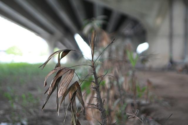 Hà Nội: Dải phân cách dưới đường trên cao nhếch nhác, đầy rác thải - 5