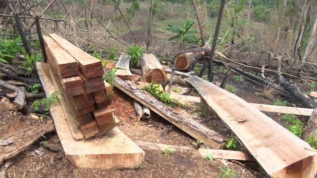 Hàng trăm hecta rừng bốc hơi sau khi doanh nghiệp thuê đất làm dự án - 2