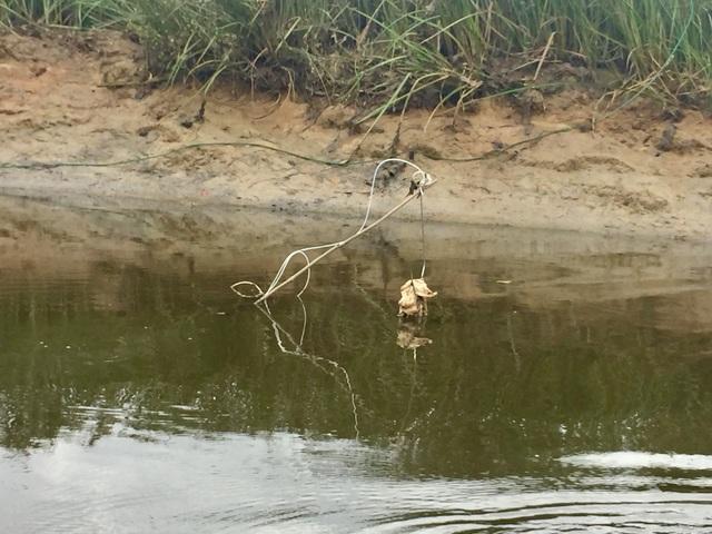 Theo dõi dấu chân, đặt bẫy quyết truy bắt cá sấu sổng chuồng - 6