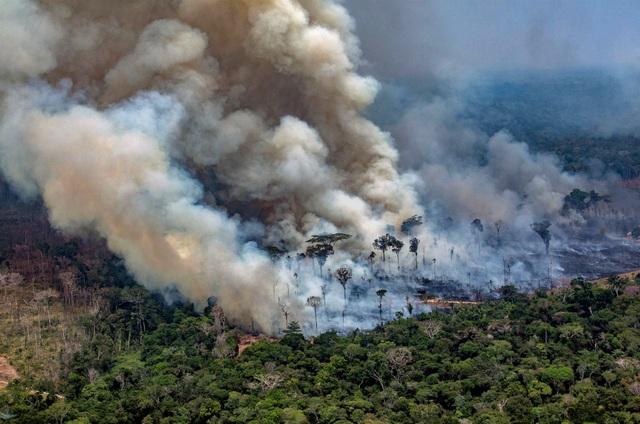Vì sao rừng Amazon lại quan trọng? - 1