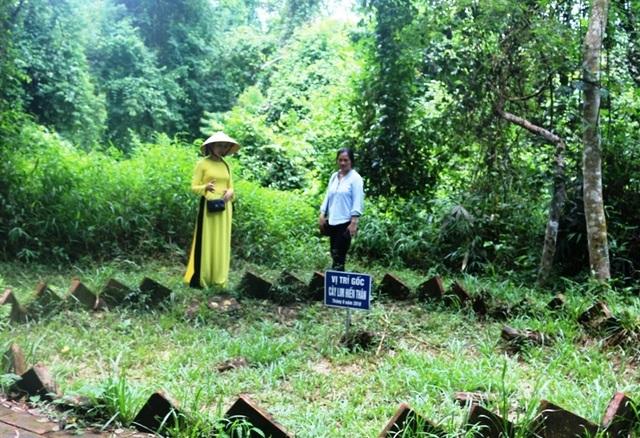 """Kỳ bí câu chuyện cây lim cổ thụ 600 năm tuổi """"hiến thân"""" tại Lam Kinh - 7"""