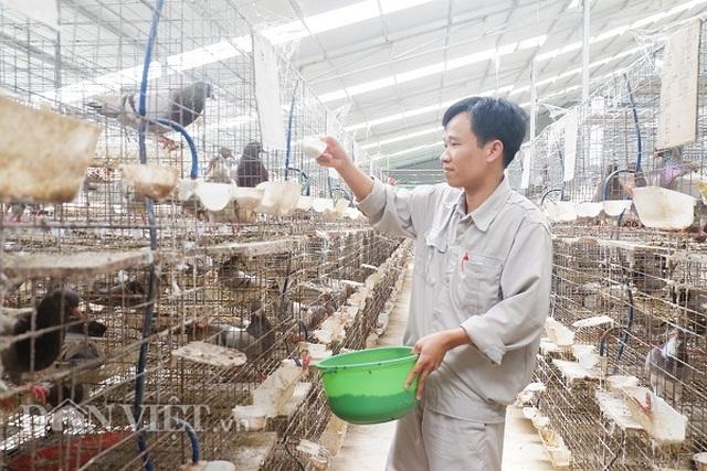 Kỹ sư bỏ nghề về nuôi chim bồ câu, lứa đầu trắng tay sau là tỷ phú - 3