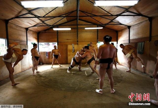Cuộc đời của một võ sĩ Sumo: Kỷ luật thép, bữa ăn khổng lồ và giấc ngủ với... bình oxy - 6