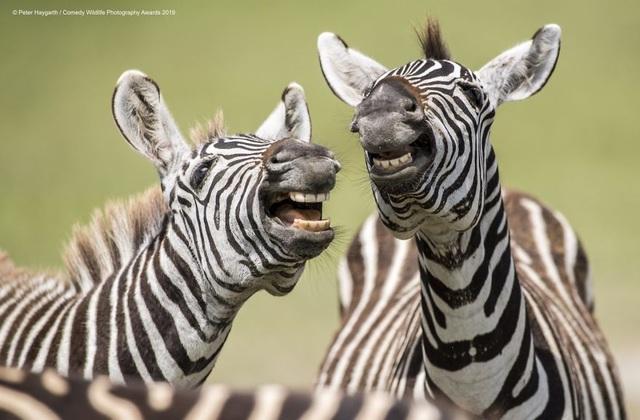 Cười xả láng với những tấm ảnh trong cuộc thi nhiếp ảnh siêu hài hước  - 14