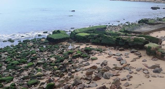 Bãi biển Quy Nhơn bất ngờ phát lộ bãi đá phủ rêu xanh - 4
