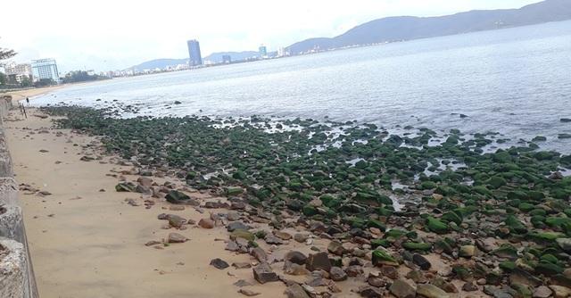 Bãi biển Quy Nhơn bất ngờ phát lộ bãi đá phủ rêu xanh - 7