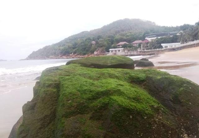 Bãi biển Quy Nhơn bất ngờ phát lộ bãi đá phủ rêu xanh - 5
