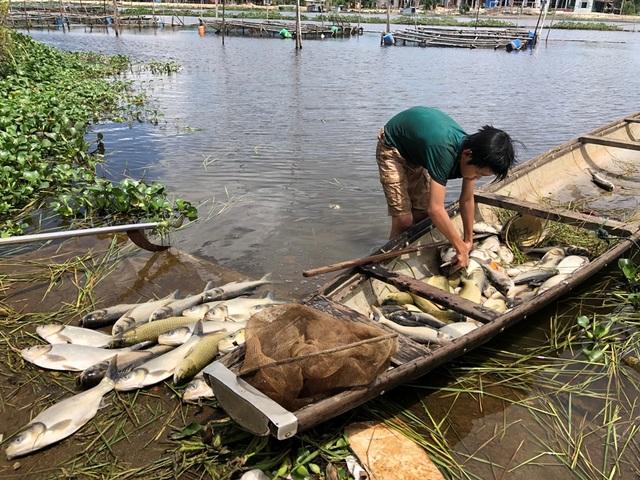 Gần 70 tấn cá lồng bỗng dưng... chết sạch - 1