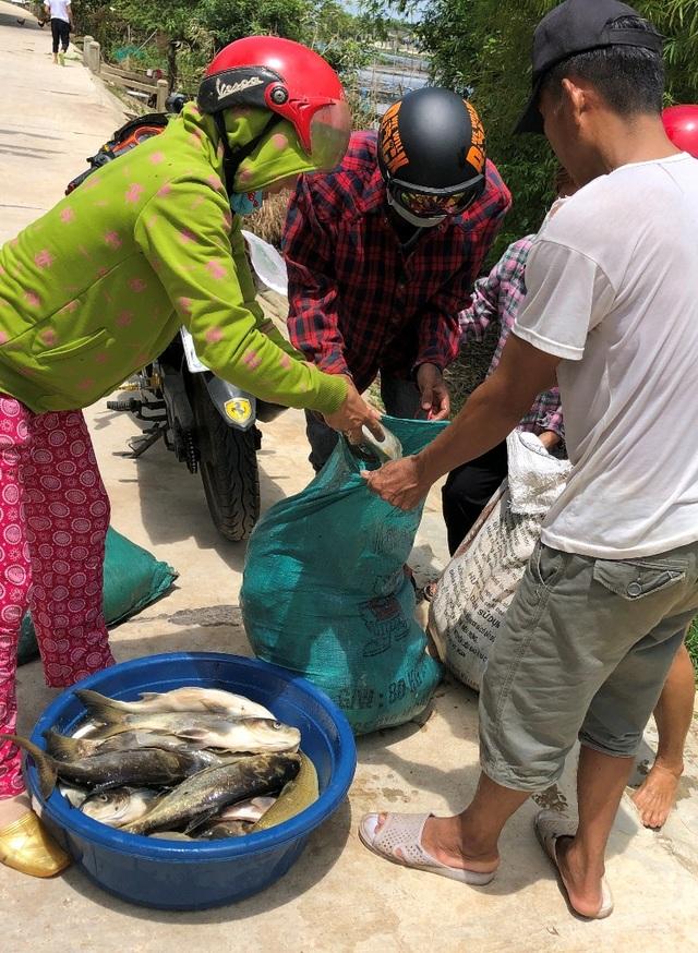 Gần 70 tấn cá lồng bỗng dưng... chết sạch - 5