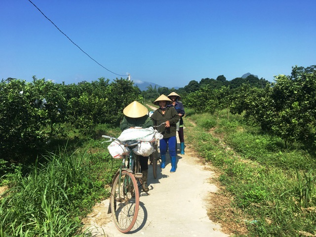 Rời Thủ đô, vợ chồng cử nhân xứ Thanh về quê trồng bưởi, ổi, cam ....thu tiền tỷ - 6