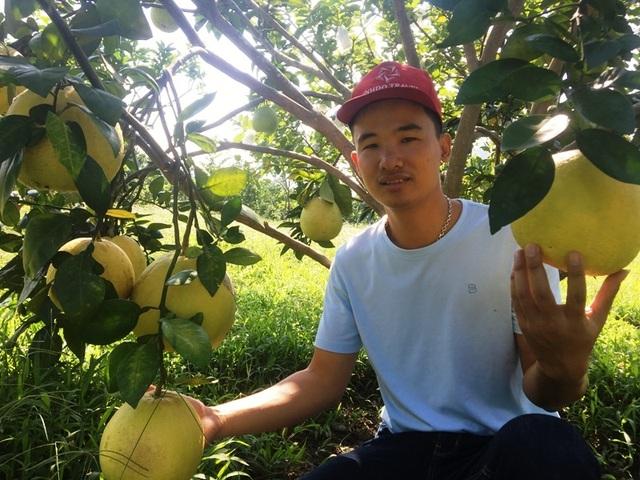 Rời Thủ đô, vợ chồng cử nhân xứ Thanh về quê trồng bưởi, ổi, cam ....thu tiền tỷ - 8