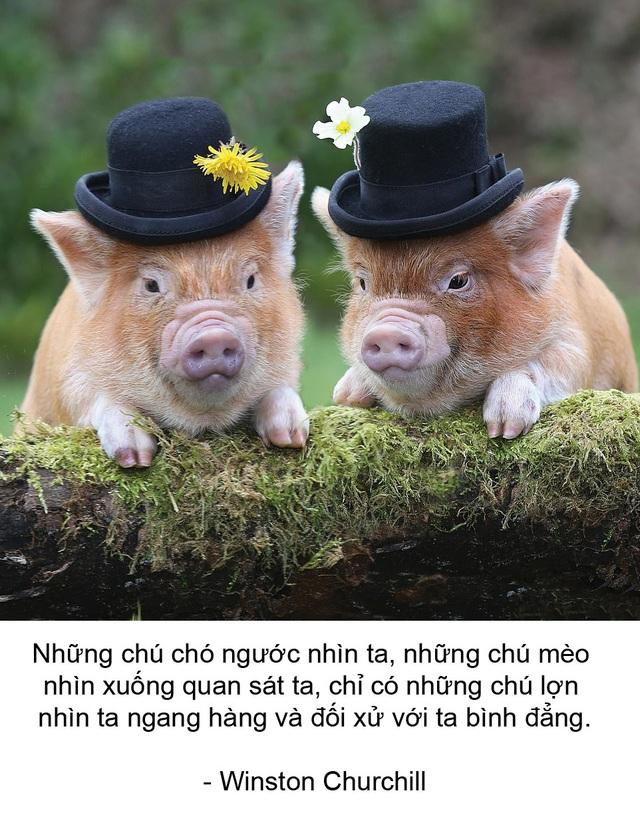 """Thú vị bộ sách ảnh """"thông thái"""" xoay quanh... những chú lợn - 4"""
