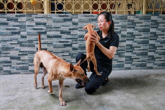 """Cận cảnh đàn chó Phú Quốc bạc tỷ của """"bóng hồng"""" xinh đẹp Hà Nội - 1"""