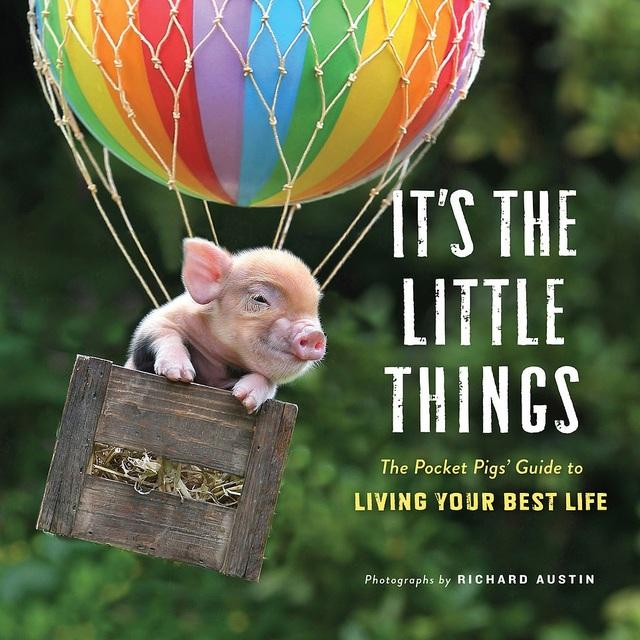 """Thú vị bộ sách ảnh """"thông thái"""" xoay quanh... những chú lợn - 11"""