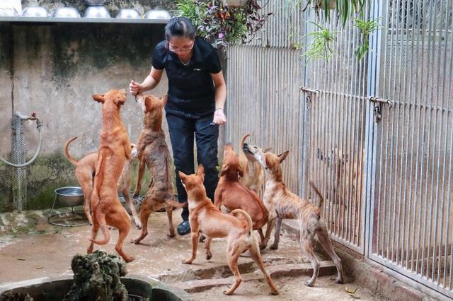 """Cận cảnh đàn chó Phú Quốc bạc tỷ của """"bóng hồng"""" xinh đẹp Hà Nội - 2"""