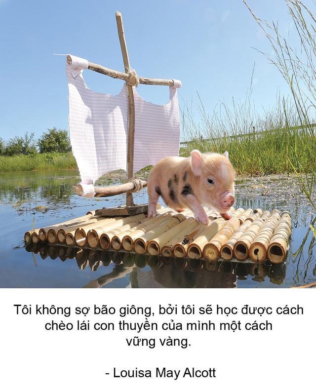 """Thú vị bộ sách ảnh """"thông thái"""" xoay quanh... những chú lợn - 6"""