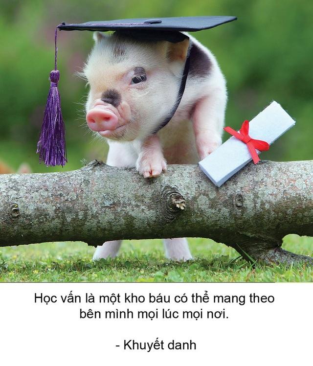 """Thú vị bộ sách ảnh """"thông thái"""" xoay quanh... những chú lợn - 3"""
