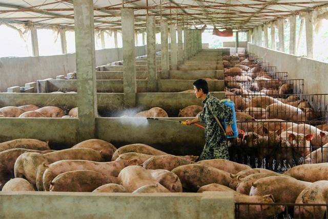 Trung Quốc vật lộn với cơn khát thịt lợn - 2