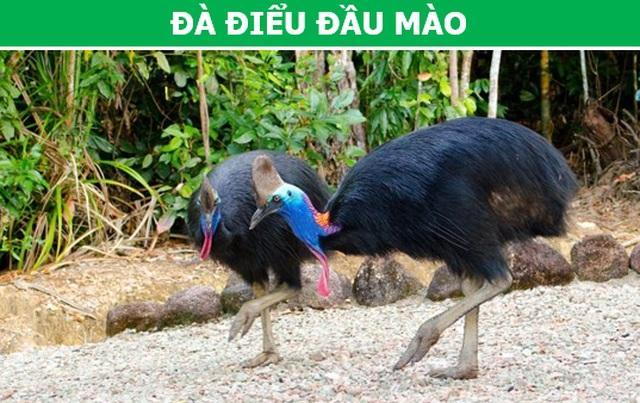 """""""Rợn người"""" với những loài chim nguy hiểm nhất thế giới (P1) - 1"""