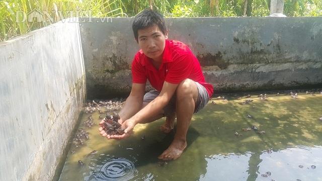 Nam Định: 8X về quê nuôi loài ếch hung dữ, kiếm 30 triệu đồng/tháng - 1