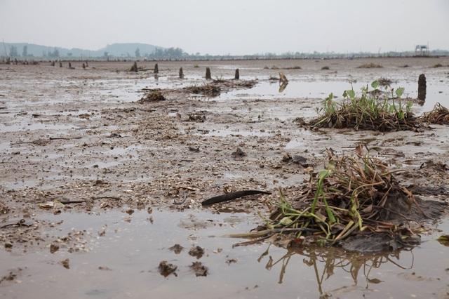 Hà Tĩnh: Ngao chết hàng loạt, người dân mất trắng 40 tỷ đồng - 5