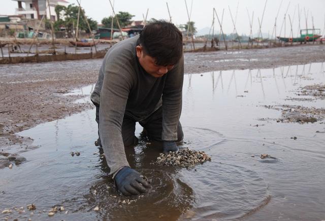 Hà Tĩnh: Ngao chết hàng loạt, người dân mất trắng 40 tỷ đồng - 2