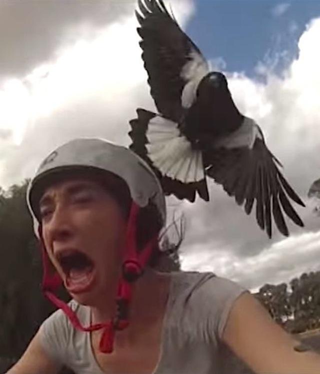 Du khách tử vong vì bị chim trong công viên tấn công - 1