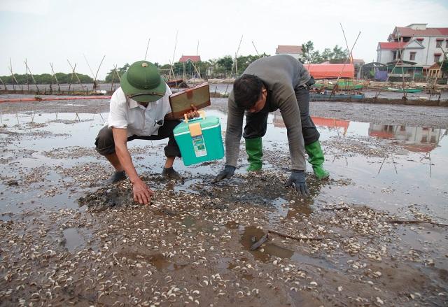 Hà Tĩnh: Ngao chết hàng loạt, người dân mất trắng 40 tỷ đồng - 6